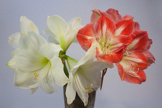 8月28日の誕生花とは?特徴や育て方・誕生石にゆかりの著名人もご紹介!