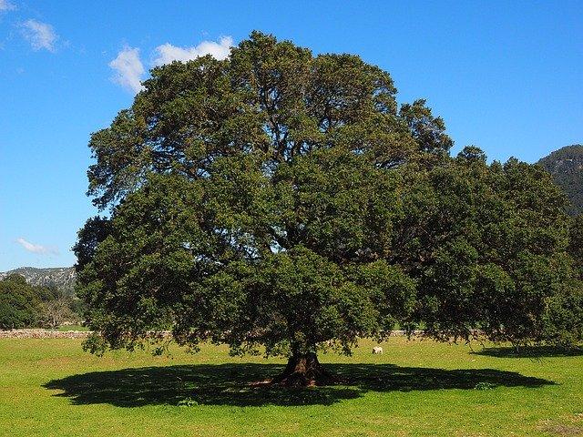 クスノキ(楠木)の香りの効果とは?樟脳の特徴や利用法をご紹介!