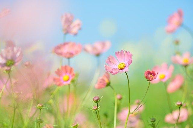 6月に種まきできる花の人気品種20選!各種の開花時期や特徴を紹介!
