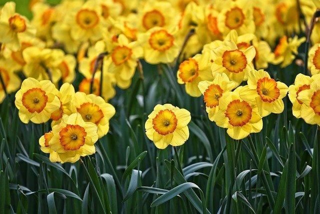 12月に種まきできる花の人気品種10選!各種の開花時期や特徴を紹介!