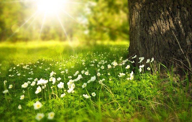 4月に種まきできる花の人気品種20選!各種の開花時期や特徴を紹介!