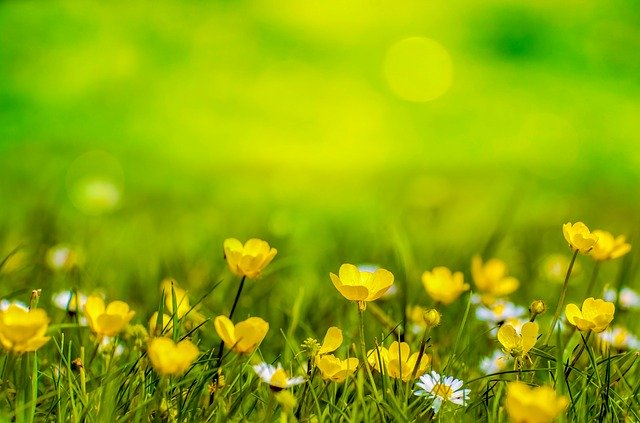 9月に植えられる多年草・宿根草17選!開花期間・花色・草丈を紹介
