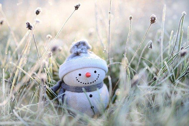 12月に植えられる多年草・宿根草13選!開花期間・花色・草丈を紹介!
