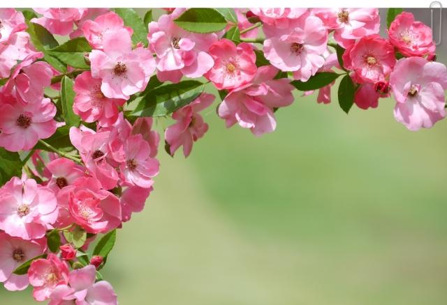 つる性植物おすすめ17選!フェンスで育てる目隠しとして最適な品種は?