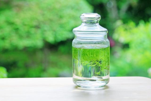 「育てる水草」とは?アクアリウムを簡単に始められるキットをご紹介!