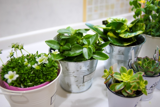 小さい観葉植物27選!おうち時間を楽しめる人気品種27種類を紹介