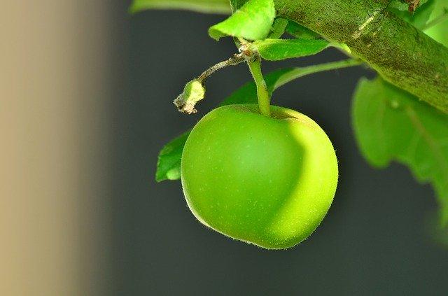 王林(おうりん)とは?青りんごの代表といわれる特徴や選び方を紹介!