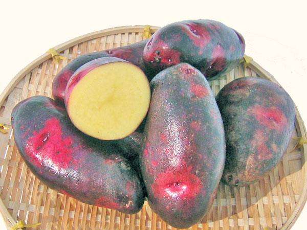 デストロイヤってどんなジャガイモ品種?味の特徴やおすすめレシピを紹介!