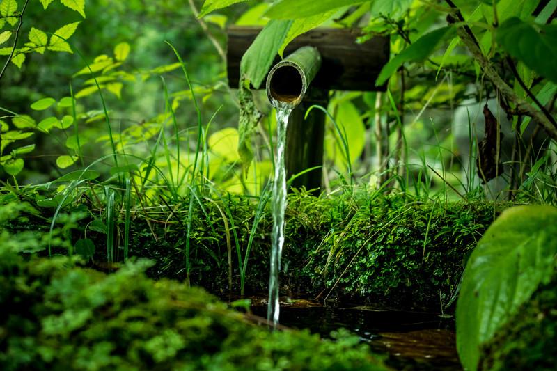 苔盆栽に向いている苔3選!おすすめする理由や栽培・管理のコツをご紹介
