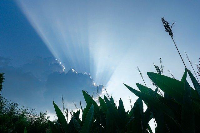 ケイピンエースとは?葛(クズ)を枯らす除草剤としての効果や使い方を紹介!