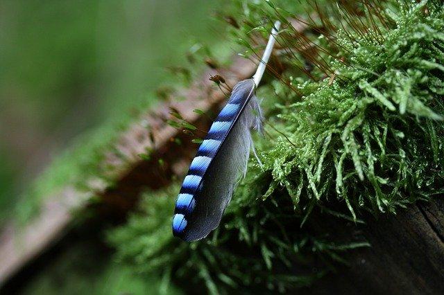 コウヤノマンネングサとは?苔のとしての特徴や育て方・管理方法をご紹介!
