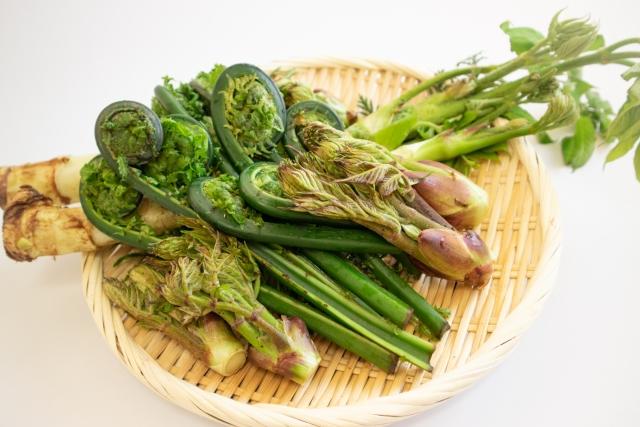 山菜18種類まとめ!生えている場所・見分け方やおすすめの食べ方をご紹介!