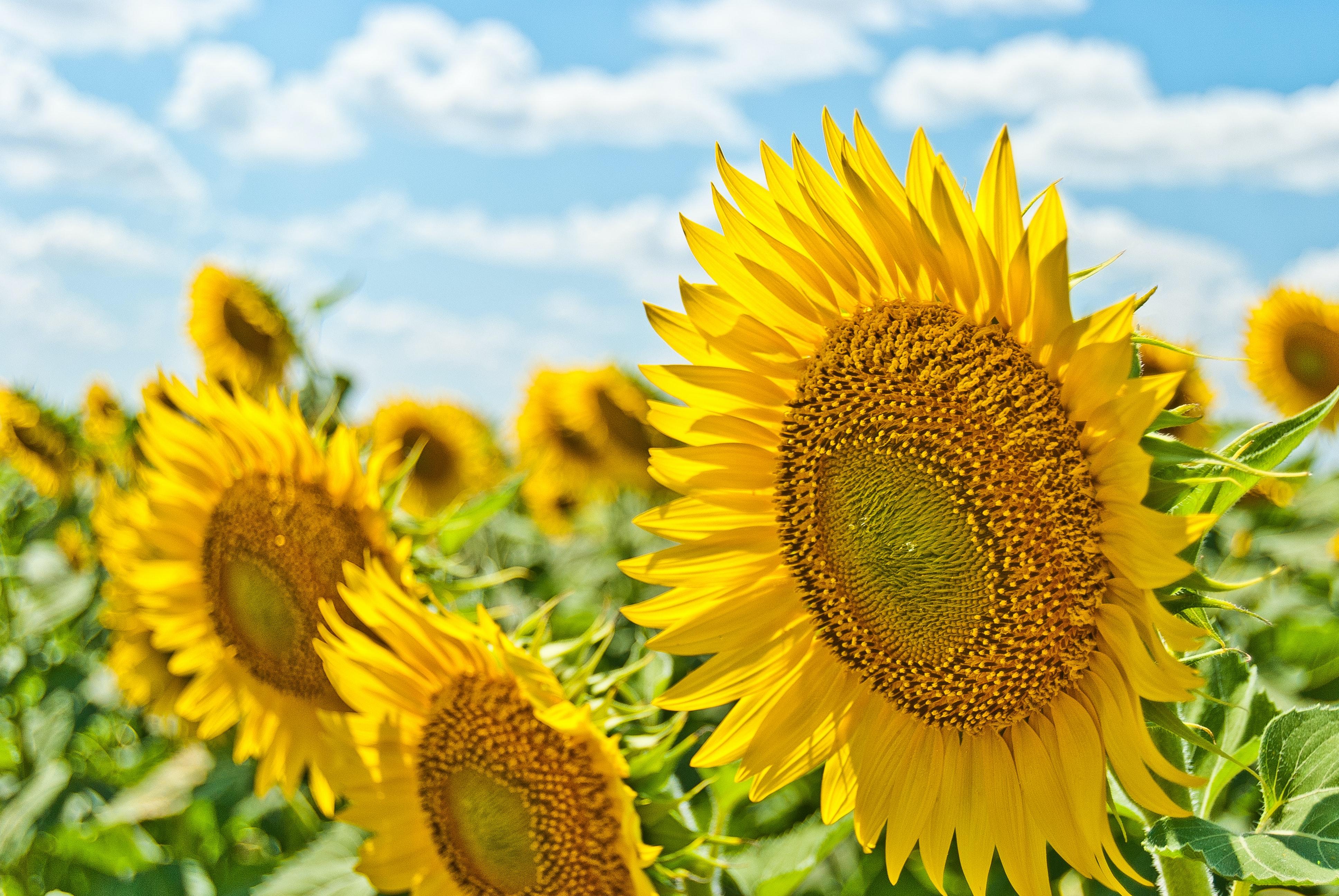 植物も夏バテする?酷暑での管理方法と水やりの注意点を詳しく解説!