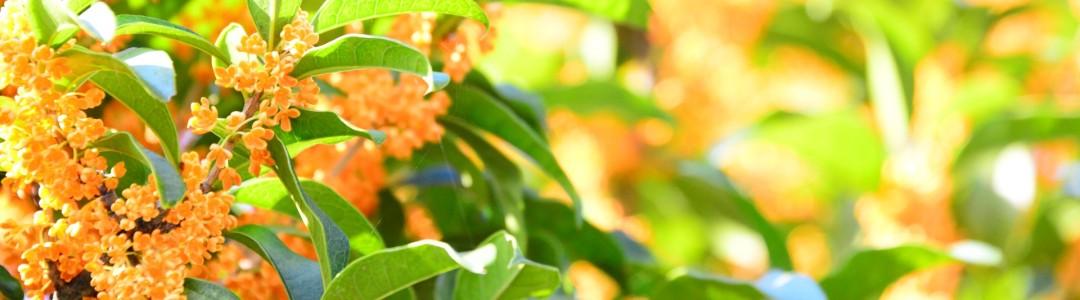 常緑樹のイメージ