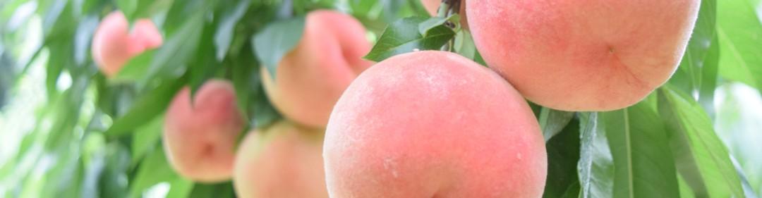 果樹のイメージ