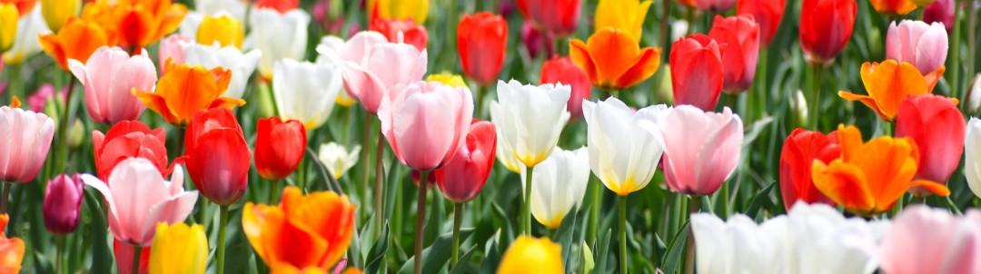 花(園芸)のイメージ