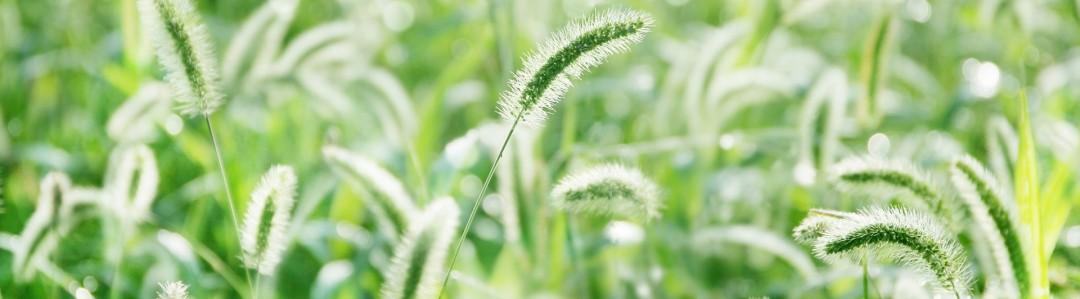 病害虫・雑草のイメージ