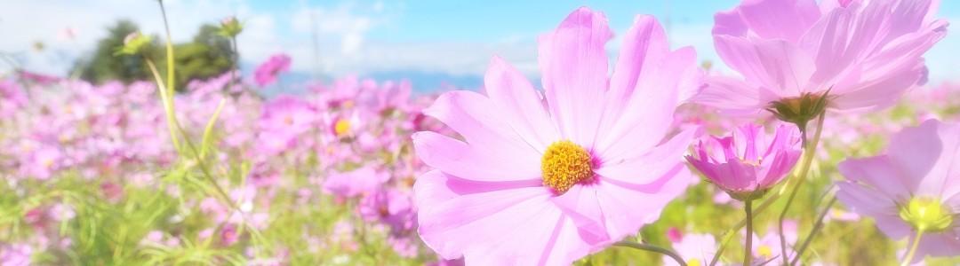 花言葉のイメージ