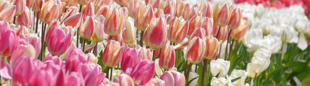 誕生花のイメージ