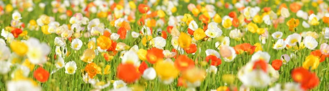 花図鑑のイメージ