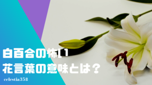 白百合の怖い花言葉の意味とは?種類・色別の花言葉の意味をご紹介!