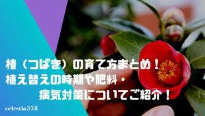 椿(つばき)の育て方まとめ!植え替えの時期や肥料・病気対策についてご紹介!