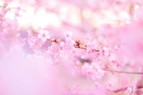 春生まれの女の子の名前!春を連...