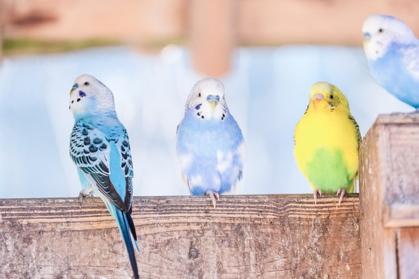 ふん 夢 占い 鳥 の 鳥にまつわるスピリチュアルな意味やサインとは?!羽・色別・死骸
