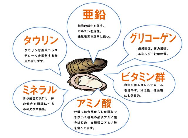 牡蠣に含まれる栄養 | 広島産牡蠣100%配合 カキエキスは日本ヒューマントラス (15354)
