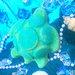 世界海洋デー!LUSHの新作ウミガメの入浴剤「タートル ジェリーボム」を通して社会問題を考える