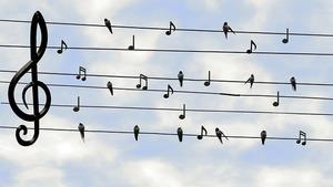音楽用語「sonore」の意味を解説!