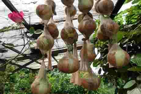 玉ねぎ の 仕方 新 の 保存