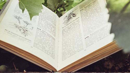 英文の書籍