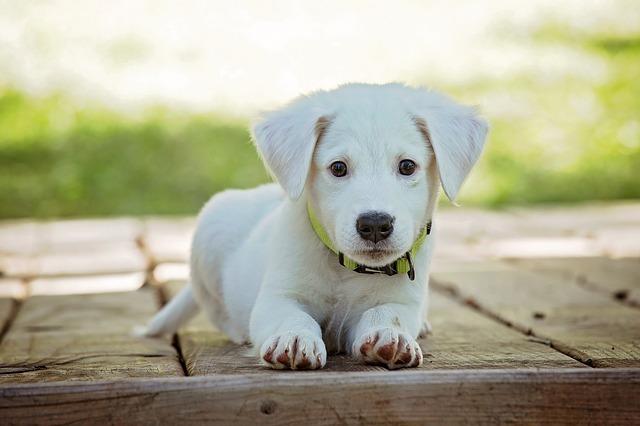 犬用フローリング対策5選!それぞれの床のメリットや費用を比較検証!