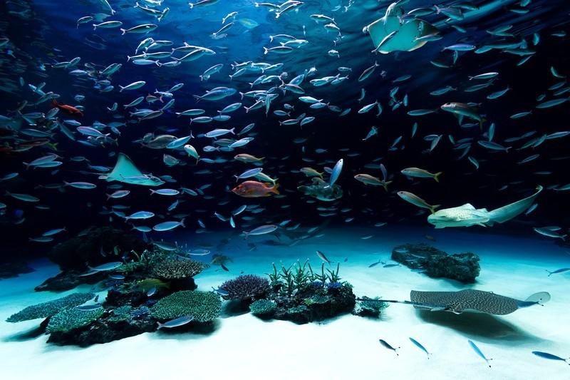 げんげ(幻魚)とは?富山の特産といわれる魚の特徴・食べ方を紹介!