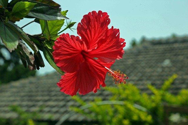 タンカーユーエーとは?子どもの1歳の誕生日を祝う沖縄の伝統行事?