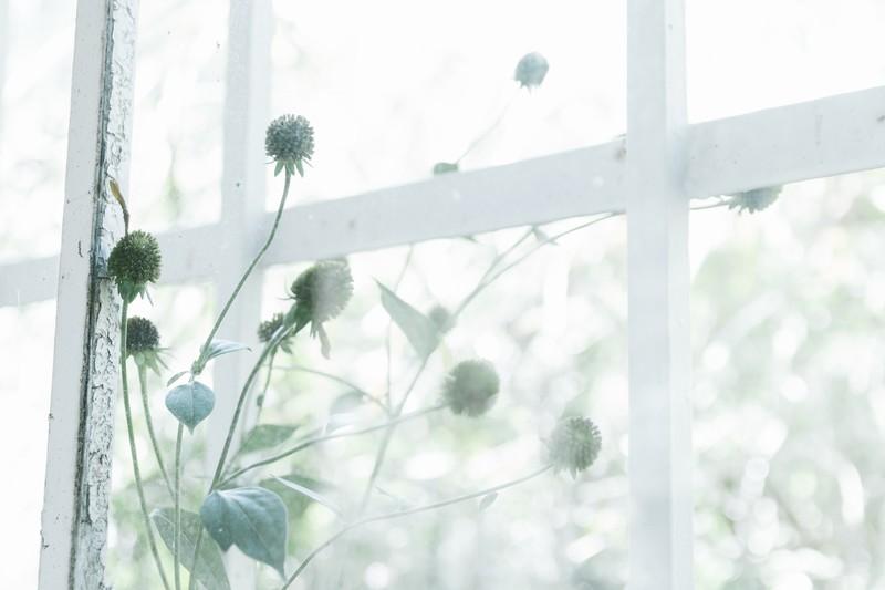 ガラスフィルムの種類と活用方法!窓の目隠しや防犯対策などには最適?