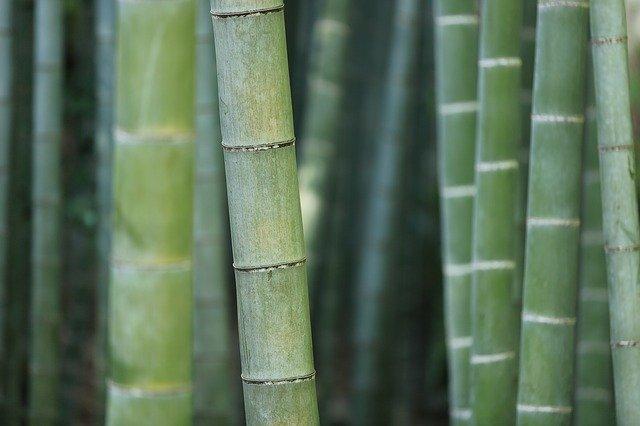 竹を枯らすのにおすすめの除草剤は?時期や注入する手順まで詳しく解説!
