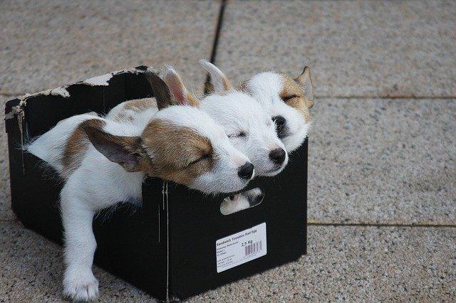 靴の空き箱をDIYしよう!捨てずに使う再利用アイデア例を8つ紹介!