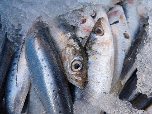 青魚の臭みを消す方法とは?生臭さの3つの原因と効果的な調理法を紹介!