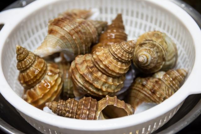 ツブ貝のさばき方!殻からの取り出し方や唾液腺の取り除き方をご紹介!