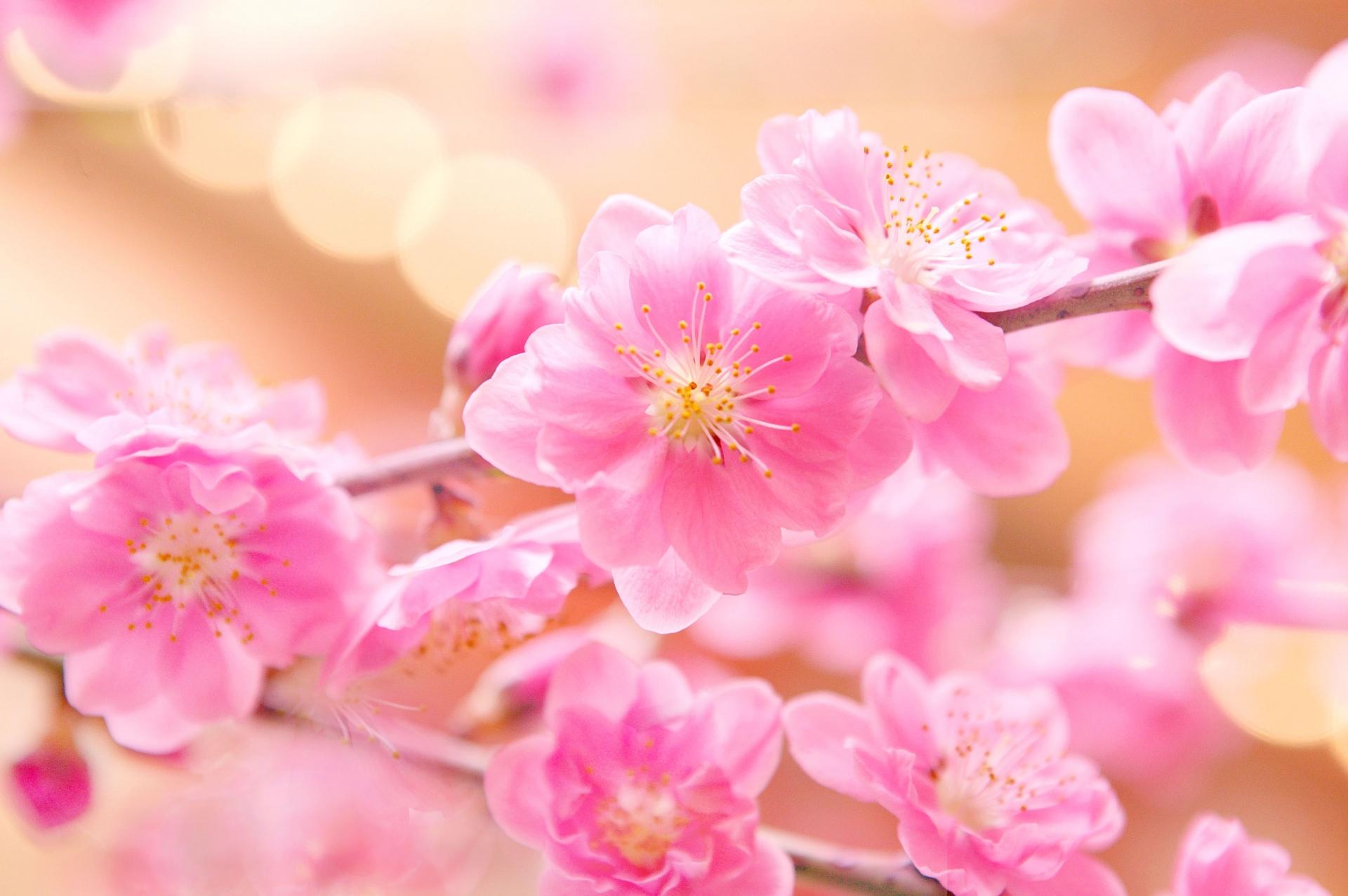 道 に で 下 園 ほふ 花 出 とめ 桃 立つ 紅 照る 春の に の を