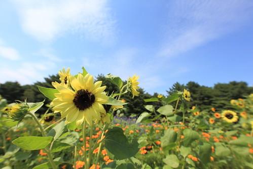 茨城のかわいい方言をご紹介!告白にも使える地元の言葉とは?