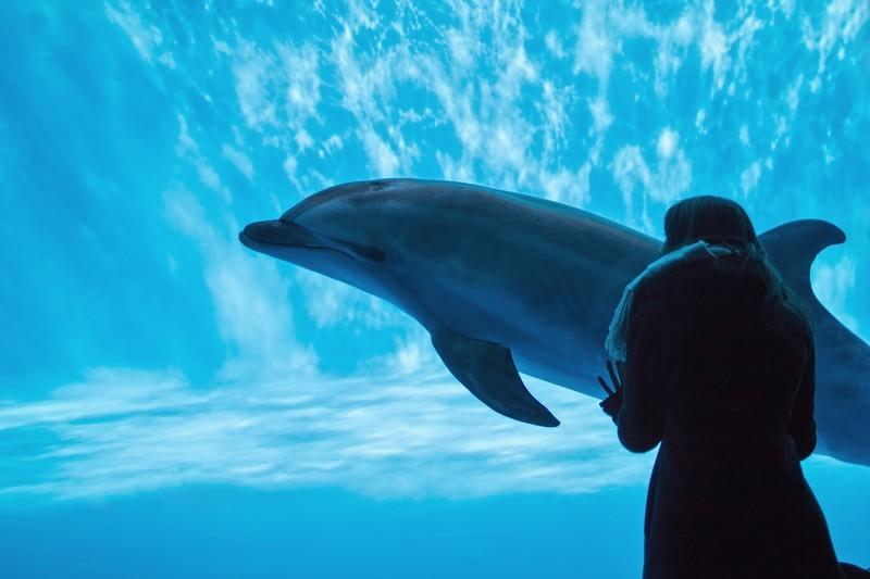 神奈川で人気の水族館!無料・安い・おすすめスポットまで徹底紹介