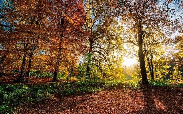 八幡平で紅葉を楽しむ!見ごろやおすすめの場所・アクセスは?
