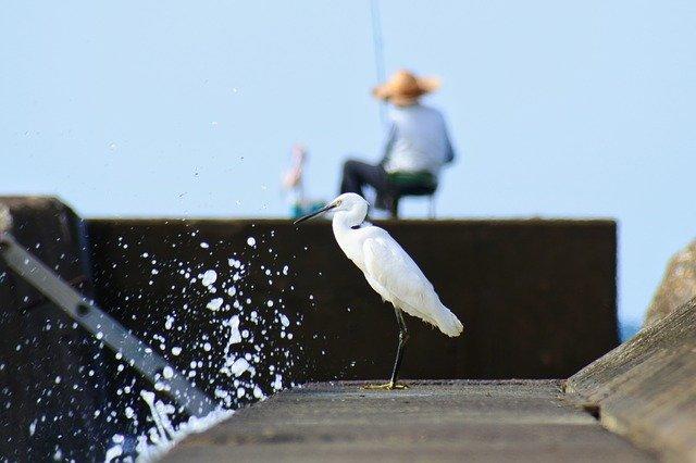 大洗のおすすめ釣り場情報!釣れる魚種や周辺の駐車場・釣り具屋もご紹介