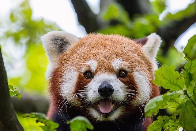 横浜で遊ぶなら「よこはま動物園ズーラシア」がおすすめ!園内を徹底紹介