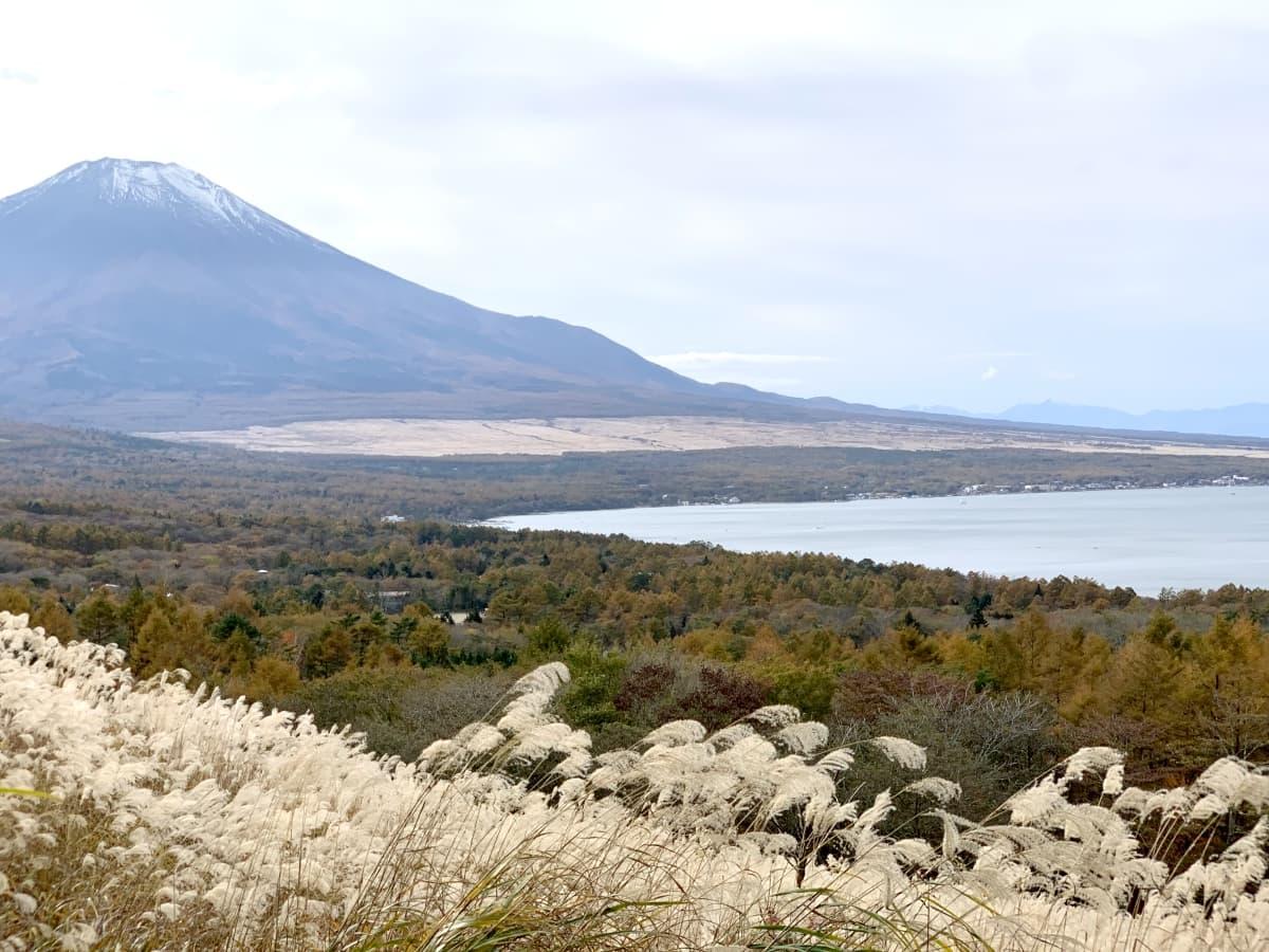 富士五湖で人気の西湖・湖畔キャンプ場!その全貌と魅力を紹介