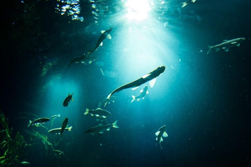 浜松の水族館ウォットはおすすめの体験学習施設!浜名湖の生き物を直に触れられる?