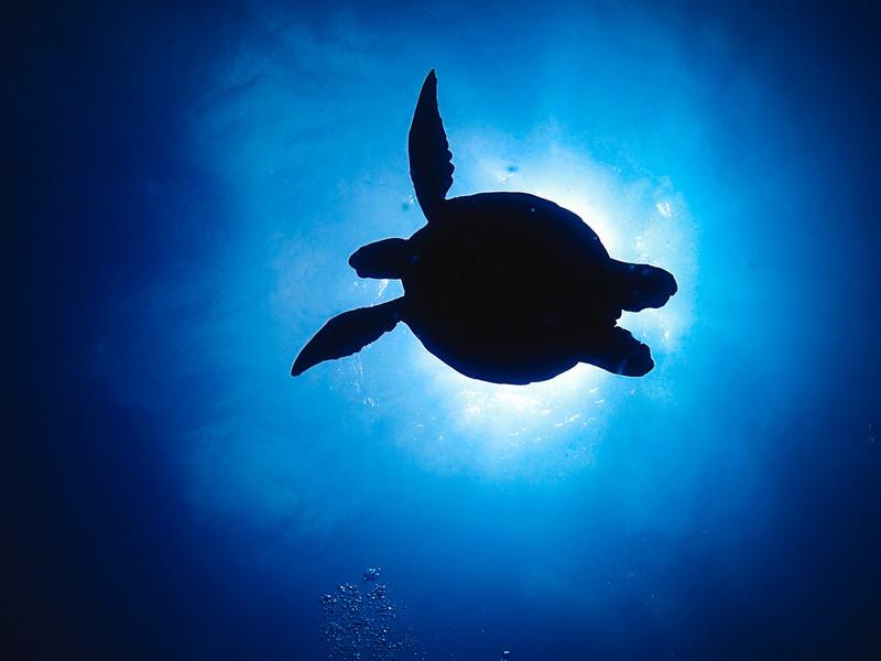 高知の透明度抜群なダイビングスポット!綺麗な海が堪能できる柏島など離島を紹介